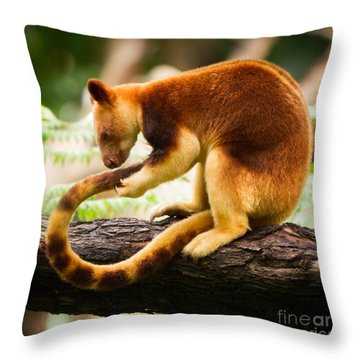Goodfellows Tree Kangaroo Throw Pillow