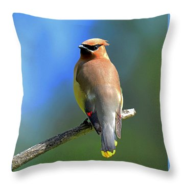 Throw Pillow featuring the photograph Gorgeous Cedar Waxwing by Rodney Campbell