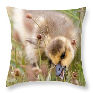 Gosling Nibble Throw Pillow