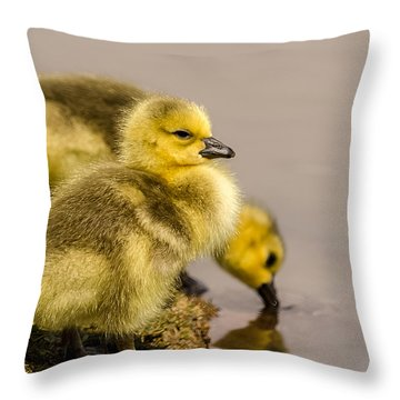 Throw Pillow featuring the photograph Gosling Siblings Drink by Yeates Photography