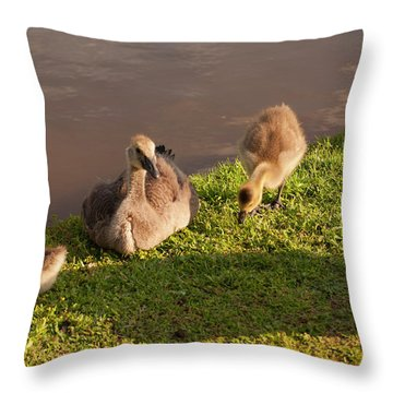 Goslings Basking In The Sunset Throw Pillow by Chris Flees