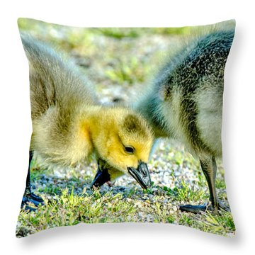 Goslings Snacking Throw Pillow