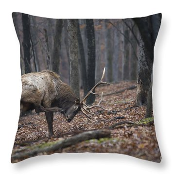 Throw Pillow featuring the photograph Got A Scratch by Andrea Silies
