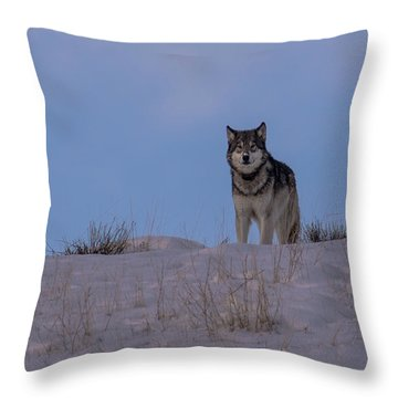 Got You Covered Throw Pillow