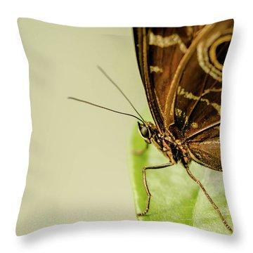 Morpho Throw Pillows