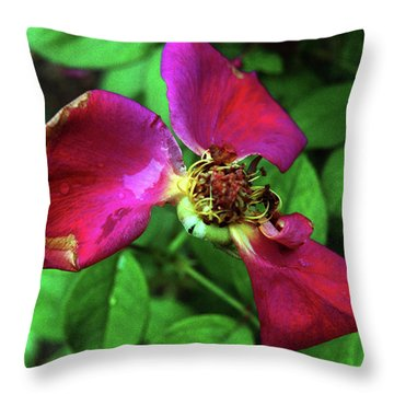 Throw Pillow featuring the photograph Graceful  Aging by Wanda Brandon