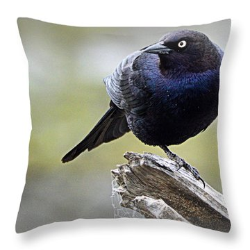 Grackle Resting Throw Pillow by AJ Schibig