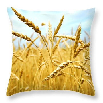 Grain Field Throw Pillow by Elena Elisseeva