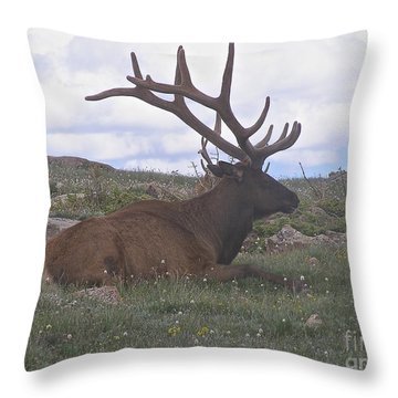 Throw Pillow featuring the photograph Grand Dad  by Alan Johnson