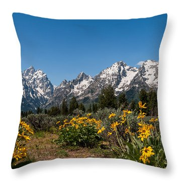 Grand Teton Arrow Leaf Balsamroot Throw Pillow