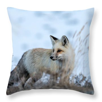 Grand Teton Fox Throw Pillow