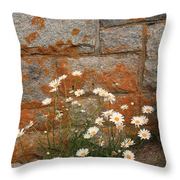 Granite Daisies Throw Pillow