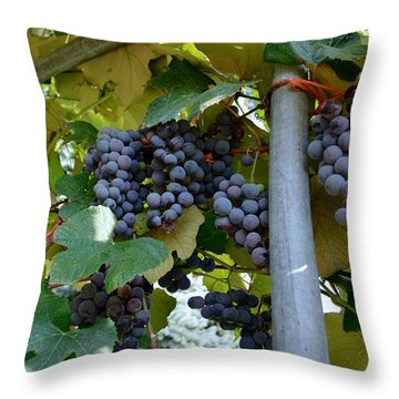 Grape Arbor 1 Throw Pillow