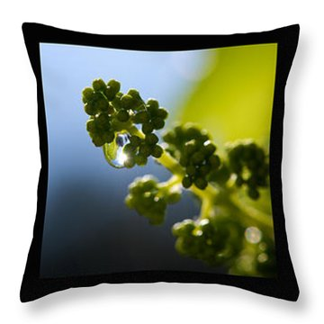 Grape Vines And Water Drops Triptych Throw Pillow by Lisa Knechtel