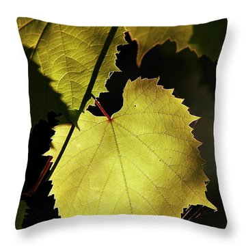 Grapevine In The Back Lighting Throw Pillow by Michal Boubin