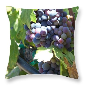 Grapevine Throw Pillow by Pamela Walrath