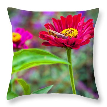 Grasshopper And Flower Throw Pillow by Edward Peterson