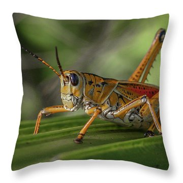 Grasshopper And Palm Frond Throw Pillow