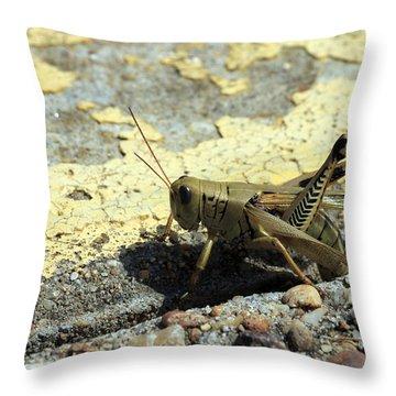 Grasshopper Laying Eggs Throw Pillow