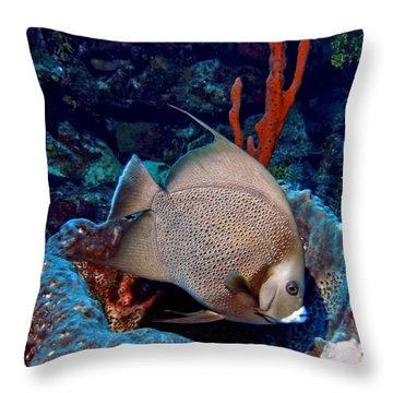 Gray Angel Fish And Sponge Throw Pillow by Amy McDaniel