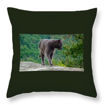 Gray Cat Stalking Throw Pillow