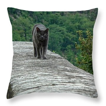 Gray Cat Prowling Throw Pillow