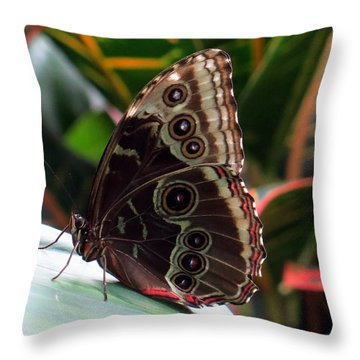 Gray Cracker Butterfly Throw Pillow by Betty Buller Whitehead