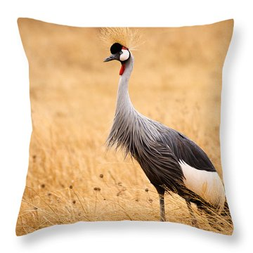 Gray Crowned Crane Throw Pillow by Adam Romanowicz