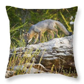 Gray Fox Hunting The Bluff Throw Pillow