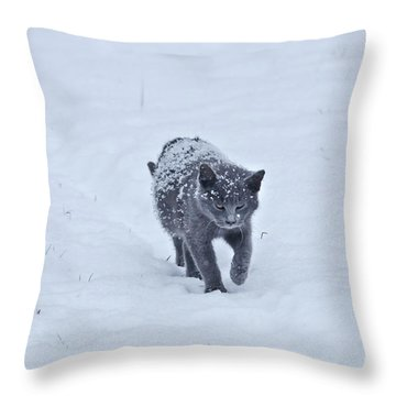 Throw Pillow featuring the photograph Gray On White by Wanda Krack