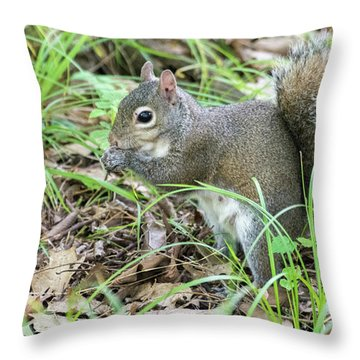 Gray Squirrel Eating Throw Pillow