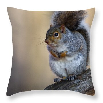 Gray Squirrel Throw Pillow by Timothy McIntyre