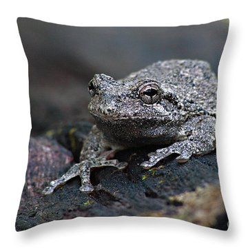 Gray Treefrog On A Log Throw Pillow by Max Allen