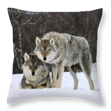 Throw Pillow featuring the photograph Gray Wolves Norway by Jasper Doest