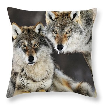 Gray Wolf Canis Lupus Pair In The Snow Throw Pillow