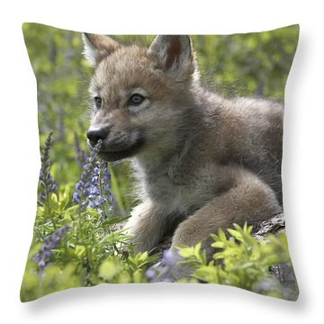 Gray Wolf Canis Lupus Pup Amid Lupine Throw Pillow by Tim Fitzharris