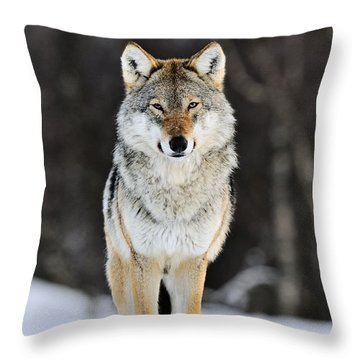 Gray Wolf In The Snow Throw Pillow