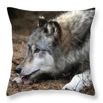 Gray Wolf Throw Pillow by Karol Livote