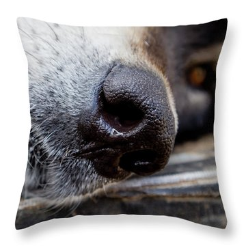 Throw Pillow featuring the photograph Gray Wolf Nose by Teri Virbickis