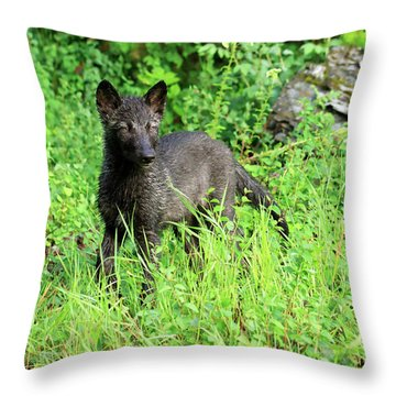 Gray Wolf Pup Throw Pillow by Louise Heusinkveld