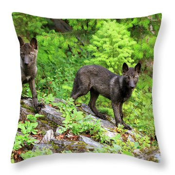 Gray Wolf Pups Throw Pillow by Louise Heusinkveld