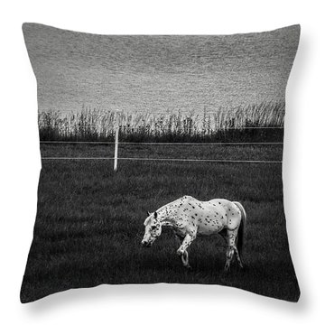 Graze Throw Pillow by Off The Beaten Path Photography - Andrew Alexander