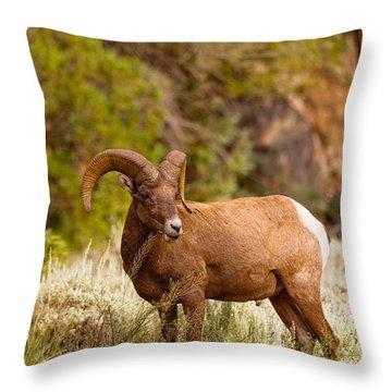 Grazin Ram Throw Pillow