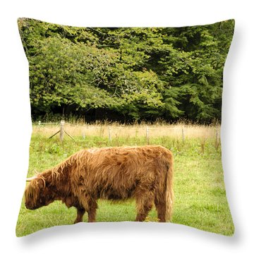 Throw Pillow featuring the photograph Grazing by Christi Kraft