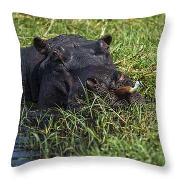 The Hippo And The Jacana Bird Throw Pillow