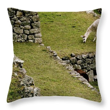 Grazing In Machu Picchu Throw Pillow