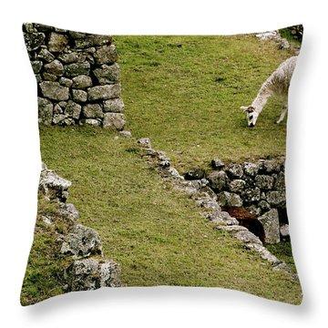 Grazing In Machu Picchu Throw Pillow