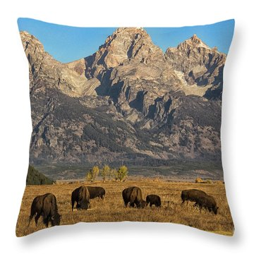 Grazing Under The Tetons Wildlife Art By Kaylyn Franks Throw Pillow