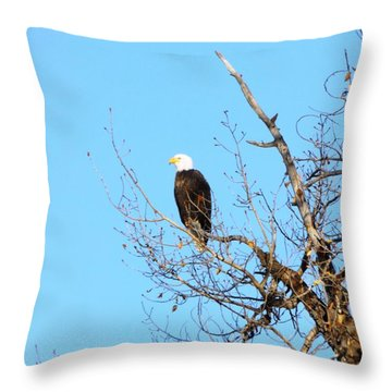Great American Bald Eagle Throw Pillow