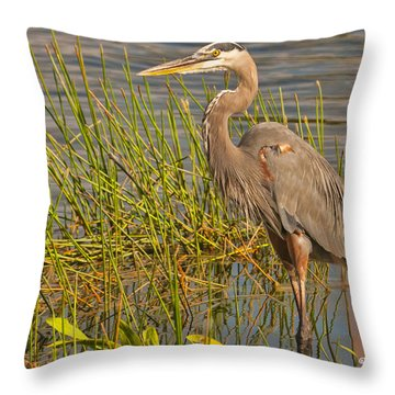 Great Blue At The Park Throw Pillow by Don Durfee
